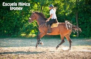 Talleres ecuestres para niños o 4 clases de equitación