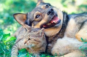 Consulta veterinaria + Vacuna de la rabia por 15€ en Santander