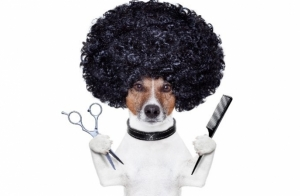 Lavado y corte para tu mascota